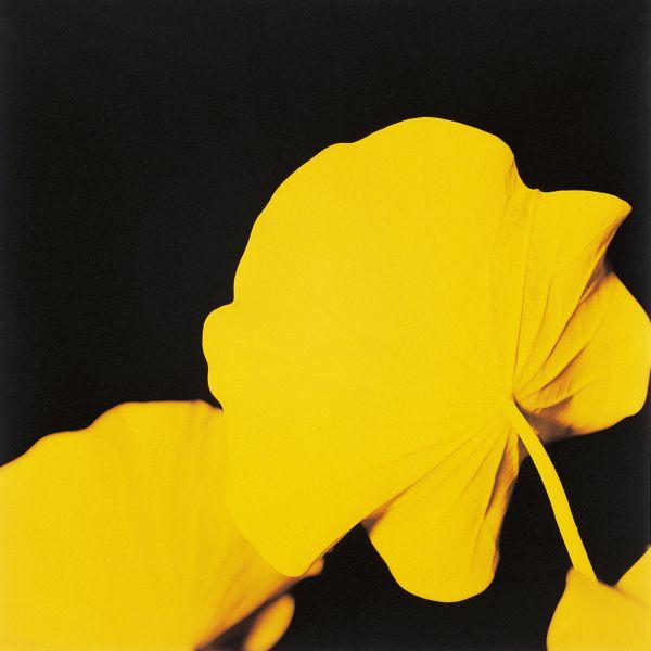 Loto n. 7 (Yellow) 1999 C-print under plexiglas