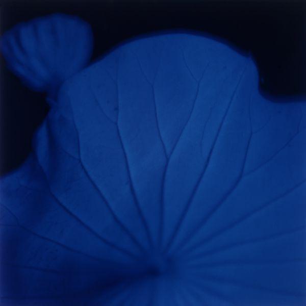 Loto n. 8 (285) 1999 C-print under plexiglas